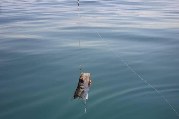 pesca con cebo vivo desde costa
