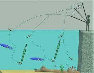 Como pescar sepias