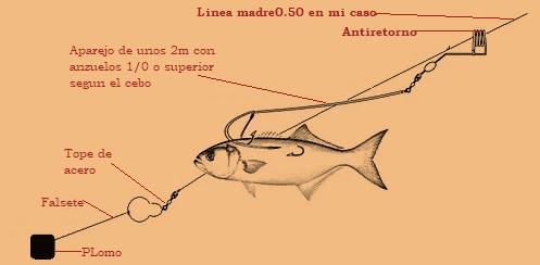Pesca al vivo 7