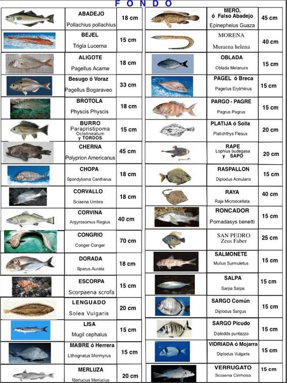 Licencias de pesca 1